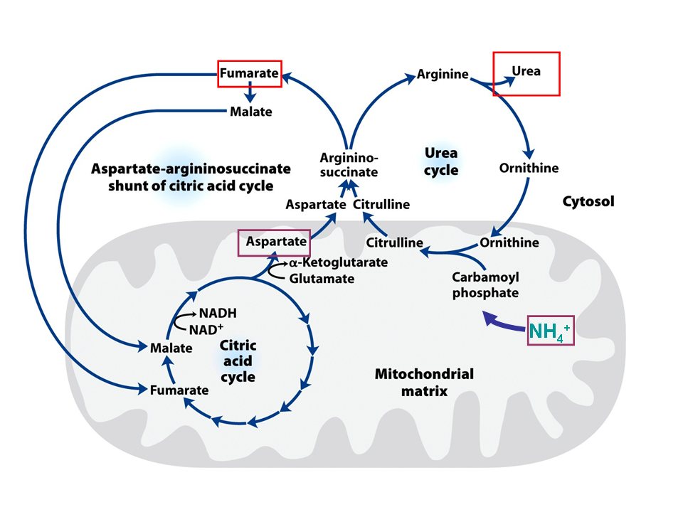 industrial applications of amino acids
