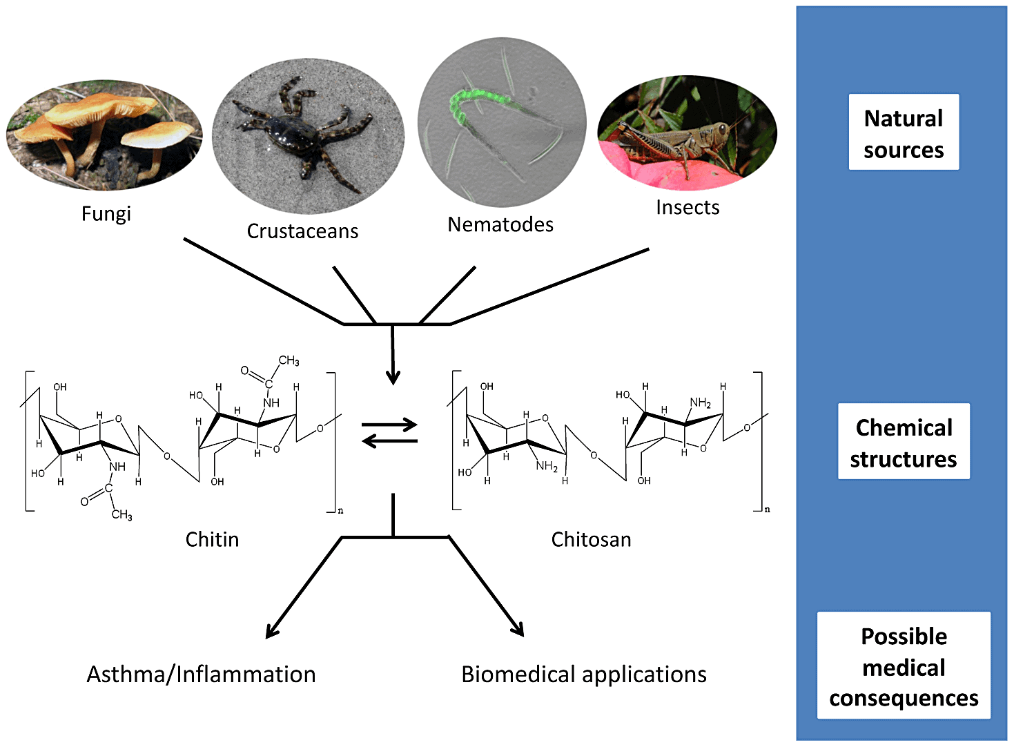 application of chitin and chitosan